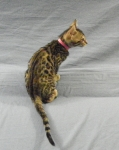 Adore Cats Bengals rosetted girl