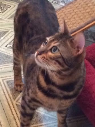 Maia has a very nice profile.