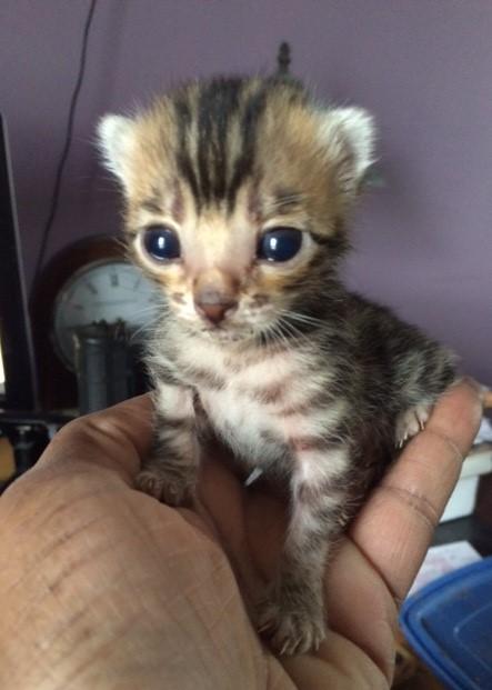 Two Week Old Kitten
