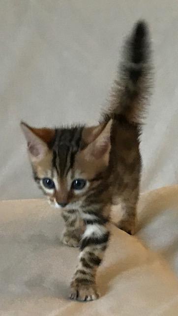Adore Cats Ferris
