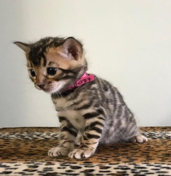 Adore Cats Betsy