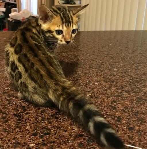 Adore Cats Joni