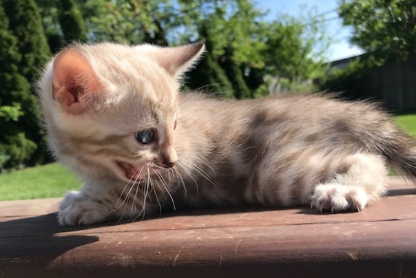 Adore Cats Austin