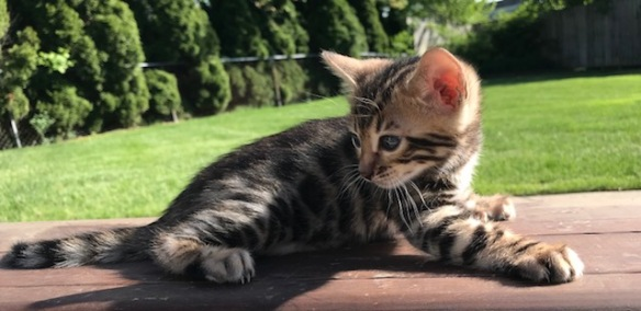 Adore Cats Beauty